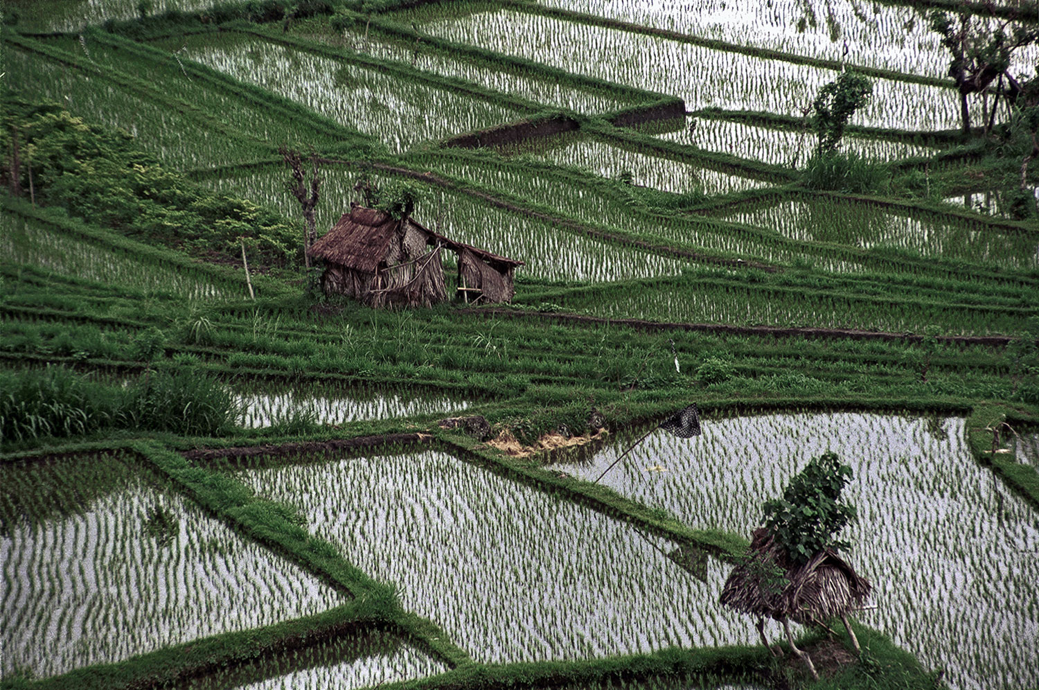Rice Fields and Shelters